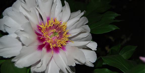 Flower Show Plant Spotlights!