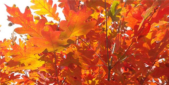Extending Autumn